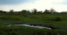 Crow Pound Bodmin Moor